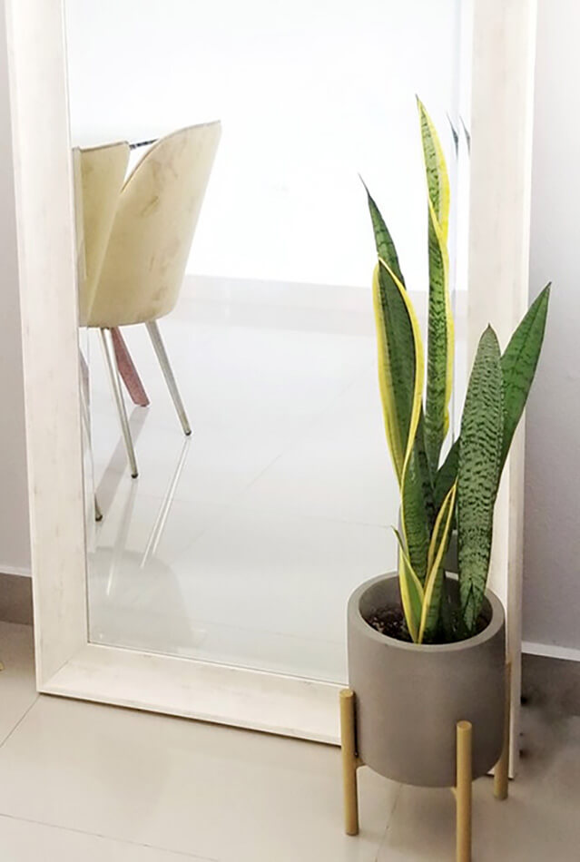 Snake Plant ( Indoor plants that does not need a lot of sun light)