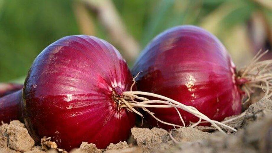onion-1565604_640 (1)