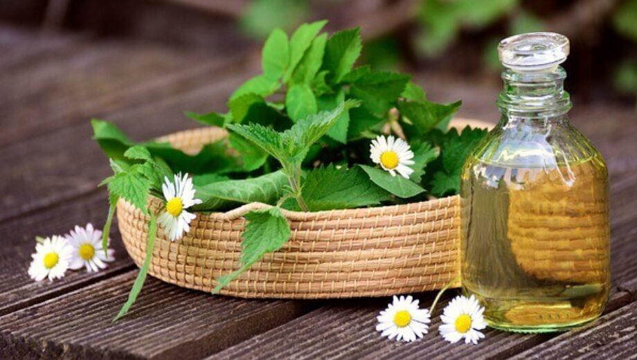 herbs-5145166_640 (1)