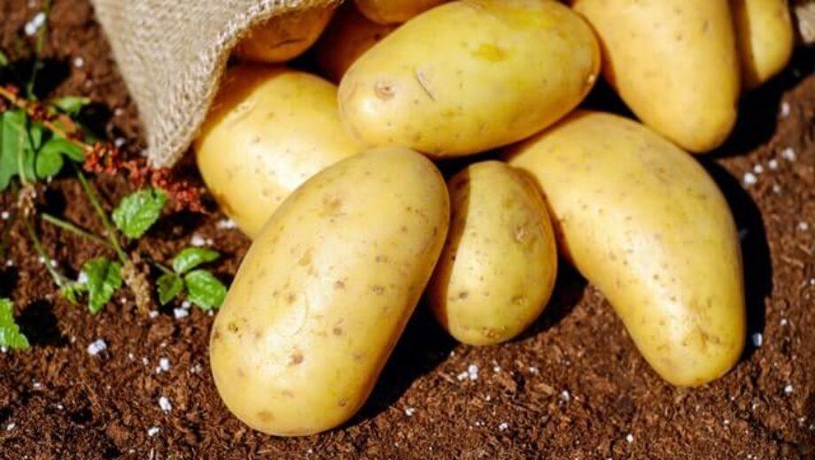 potato for skin (1)