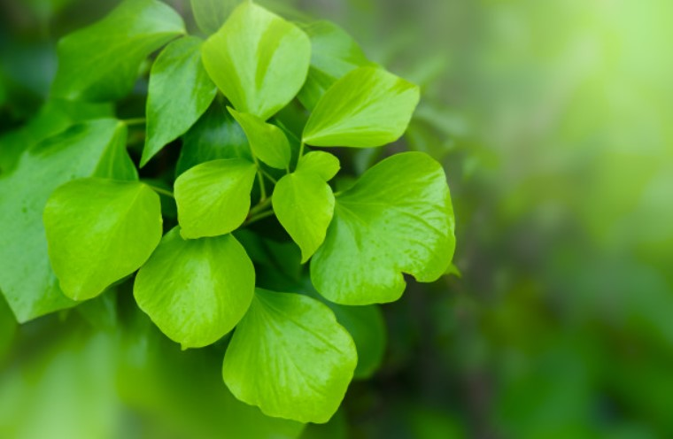 anti aging herbs for youthful skin